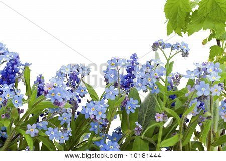 Border From Forget-me-nots (myosotis)