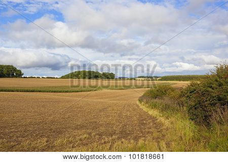 Wooded Agricultural Landscape