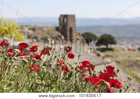 Poppies on a background of the ancient theater. Pergamum. Turkey.