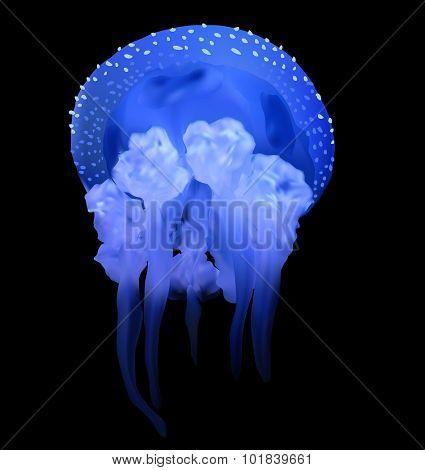 illustration with blue medusa isolated on black background