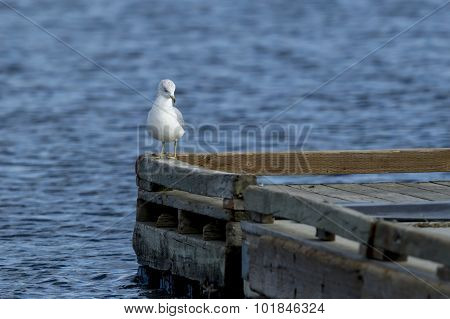 Perched On Edge Of Dock.