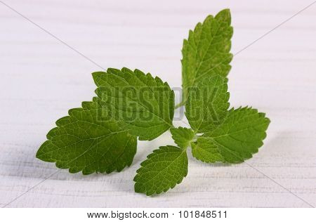 Fresh Healthy Lemon Balm On White Wooden Table, Herbalism