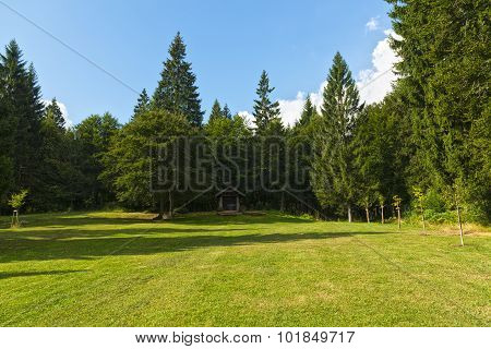 Meadow And Trees In The Mountains