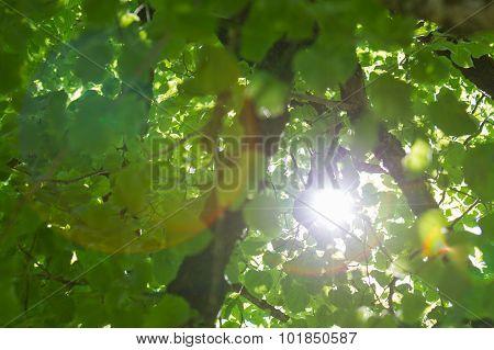 Tree With Sun Star