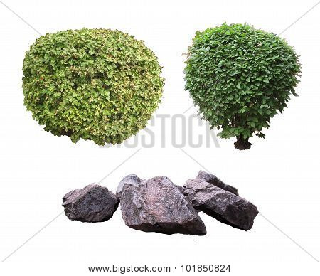 Ornamental shrubs and stones.