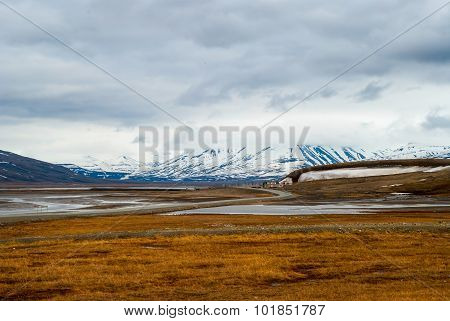Arctic Tundra In Summer, Svalbard