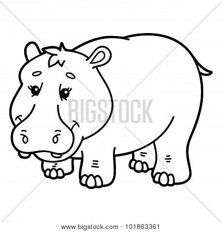 Cute hippopotamus.
