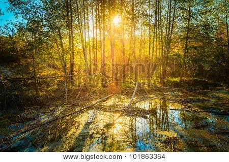 Sunny Day In Autumn Sunny Forest Trees. Nature Woods,  Sunlight