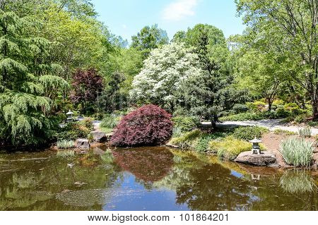 Japanese Maples In Japanese Garden