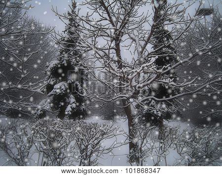 Stylized Christmas Card With Winter Landscape. Fir Tree In Snow