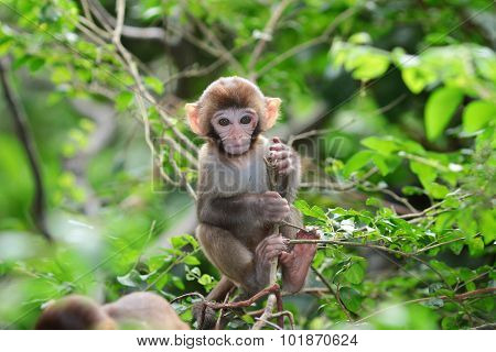 Baby Monkey At Golden Hill, Hong Kong