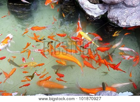 Artificial Pond With Colorful Goldfish