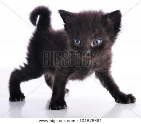 Kitten With Curved Tail On White