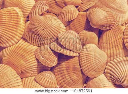shell texture