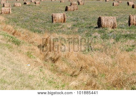 haystack in the field,summer day