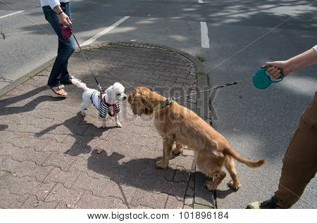 Two Dogs On The Road   Sniffing And Check Each Other