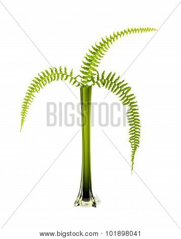 Green vase and ferns