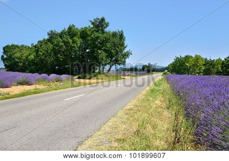 Road In Provence, France