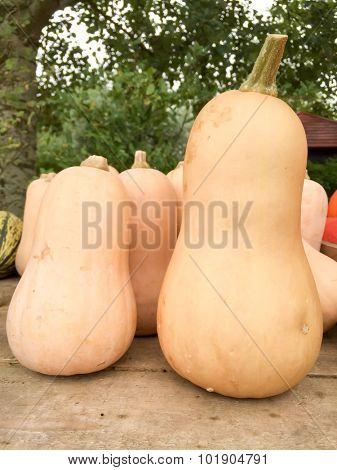 Butternut pumpkin offered at market stall