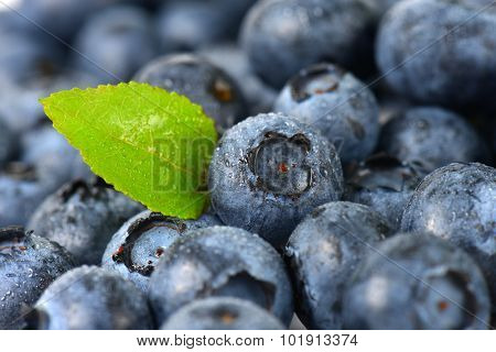 full frame macro detail of dewy fresh blueberries