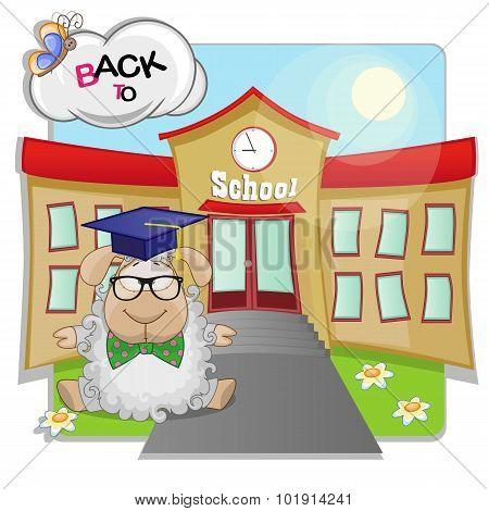 Sheep And School