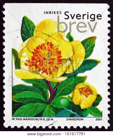 Postage Stamp Sweden 2001 Herbaceous Peony