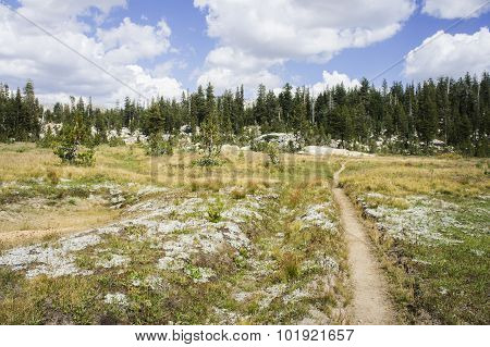 Hiking trail heading into a forest