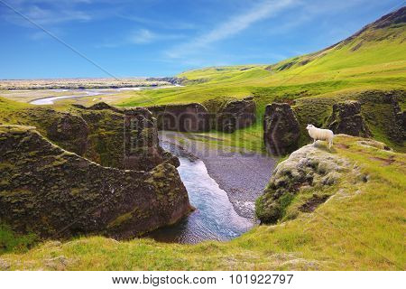 Neverland Iceland. The picturesque canyon Fjadrargljufur;, rocks with yellowed grass and blue water of the river