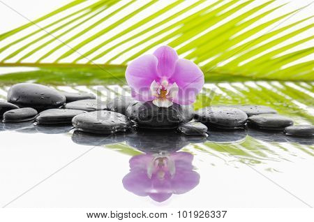 Orchid and wet black stones on wet background