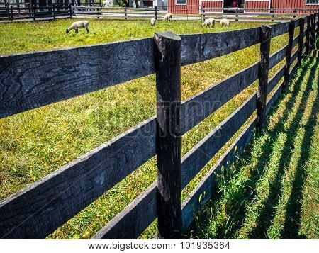 Wood Fence Receding with Sheep Grazing in Distance