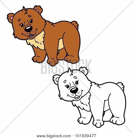 funny bear.