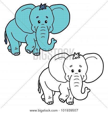 funny elephant.