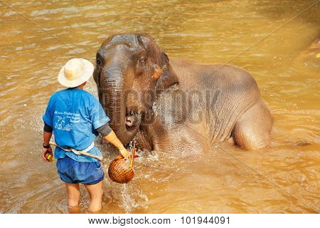 Elephants In Maesa Elephant Camp, Thailand