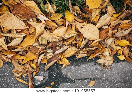 fall concept with yellow leaves .