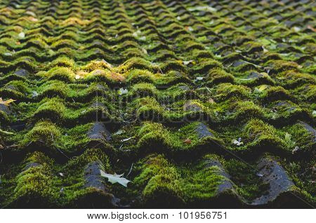 Old Tiled Roof Covered By Moss