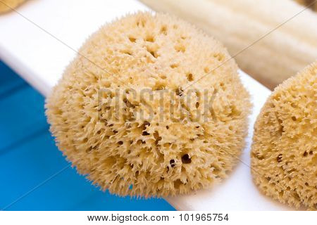 Natural Yellow Sponge For Body