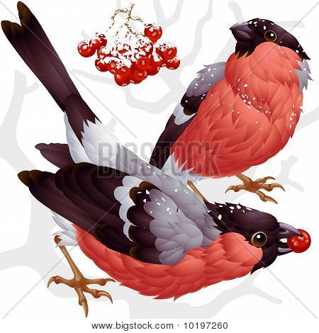 Vector bullfinch and ashberry 3
