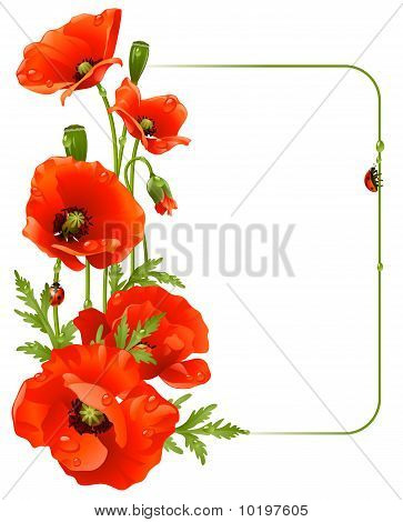 Red poppy frame