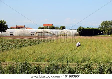 Illegal Immigrant While Working In The Fields