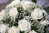 stock photo of white roses  - close - JPG