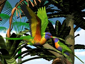 stock photo of lorikeets  - The Rainbow Lorikeet is a multi - JPG