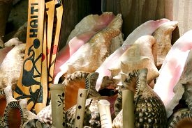 pic of conch  - Beautiful display of conch shells from a local market - JPG