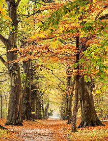 pic of bantams  - Beech trees in fall scene - JPG