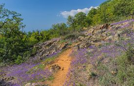 stock photo of clary  - Flowers on a green plateau above the gulf in coast of Black sea - JPG