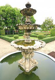 picture of fountain grass  - fountain multi - JPG