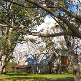 foto of bogong  - View through snow gum tree branches to Wallace - JPG