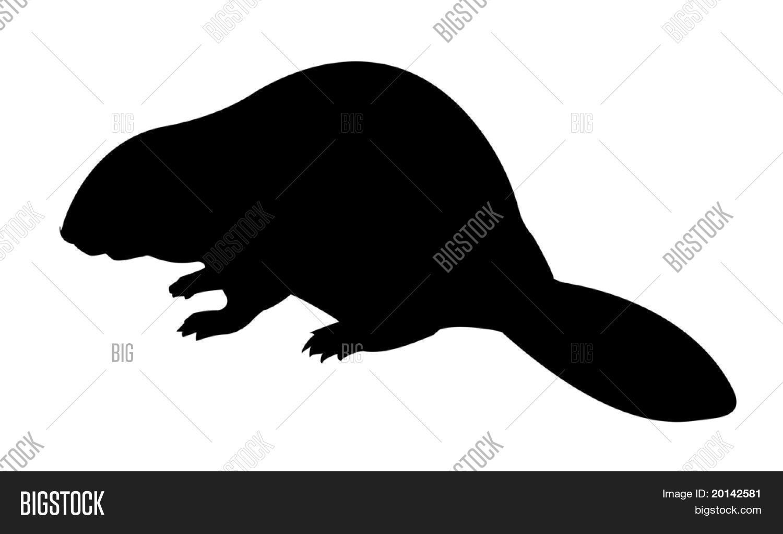 vector silhouette beaver on white vector u0026 photo bigstock