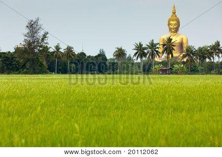 Giant Golden Buddha