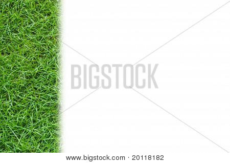 Green Grass background isolated