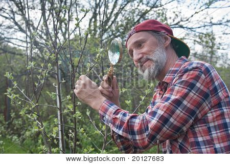 A Man Inspects Apple Tree Branch